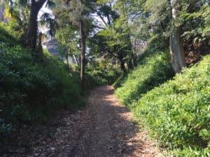 岩槻城の堀