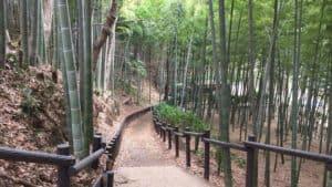 小机城の竹林