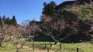 横須賀城の本丸下