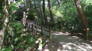 吉田城の土橋