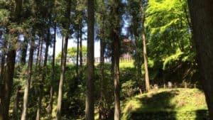 真弓山城の西側の谷沿い