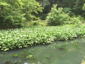 片倉城の住吉池
