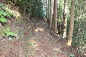 井伊直平の墓への道