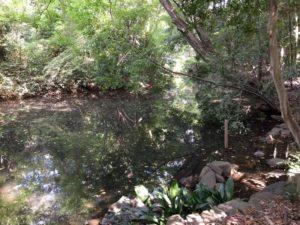 泉龍寺の弁財天池