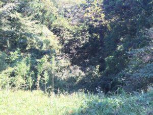 深沢城の堀
