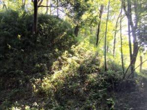 沢山城(三輪城)