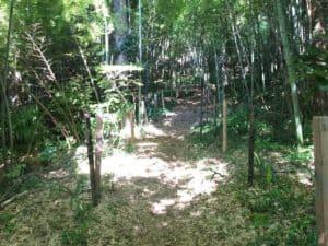小沢城の竹林