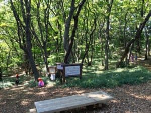 小沢城の馬場跡
