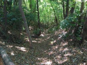 小沢城の竪堀