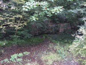 深大寺城の湿地帯