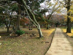 彦根城の西の丸