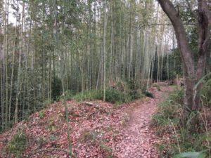佐和山城の竹林