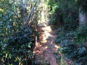 観音寺城の登山道
