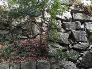 八幡山城の山頂