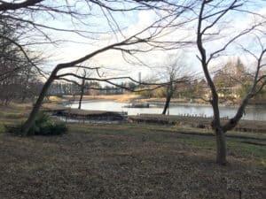 古河御所の御所沼