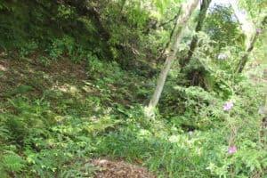 大多喜城の堀跡