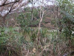 津代古戦場跡