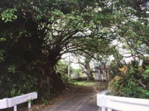 笠利本仮屋跡(大島代官所跡)